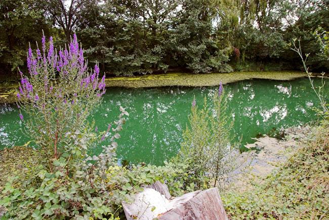 Paraje natural municipal del clot de la mare de d u burriana - Mare castellon ...